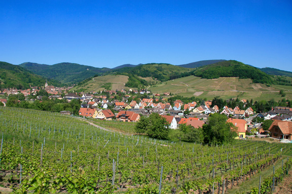 The Alsatian wine route